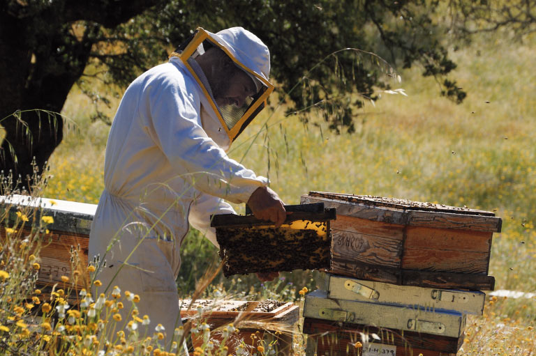 Organic honey producer Sol y Tierra working with beehives