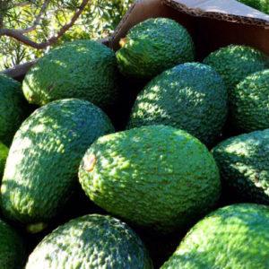 Frutorganic Haas avocado