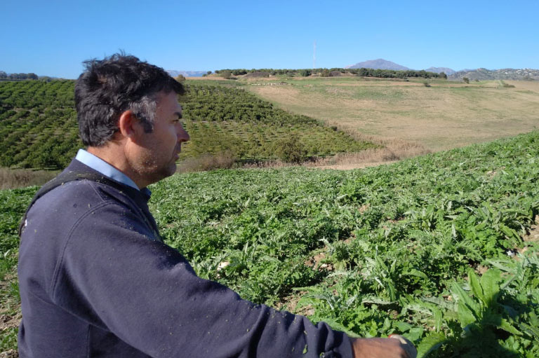 Producteur d'oranges et de citrons biologiques Antonio Gámez