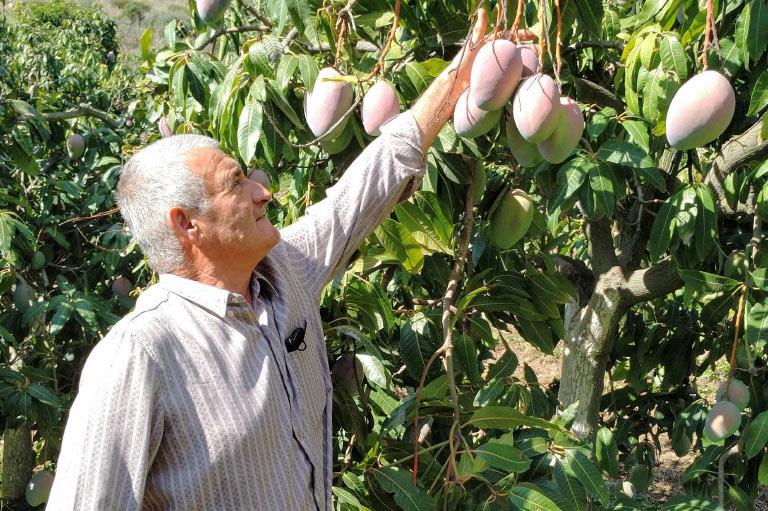 Productor orgánico de aguacate y mango Enrique López
