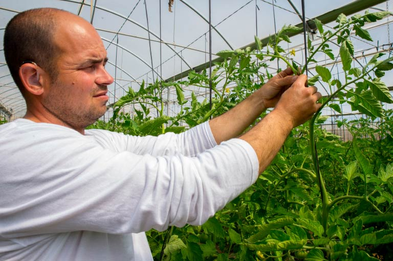 Organic fruit & vegetable producer Rubén Ayala working in his greenhouse