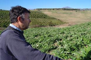 Organic orange and lemon producer Antonio Gámez