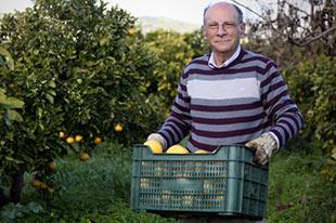 Organic farmer Francisco González Martín