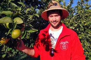 Biologische sinaasappel- en mandarijnproducent Francisco León Barceló