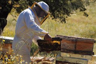 Biologische honingproducent Sol y Tierra werkt met bijenkorven