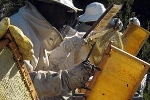 Biologische honingproducent VerdeMiel aan het werk met zijn bijenkorven