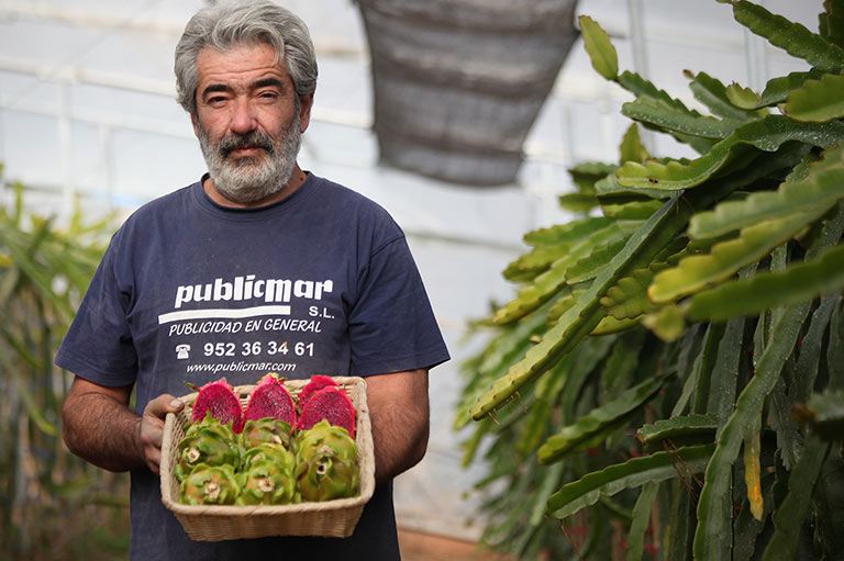 Organic dragon fruit producer Antonio Florido