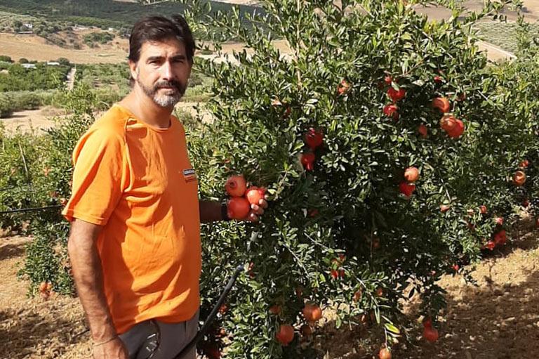 Organic fig, mango and pomegranate producer Jose Antonio Lares