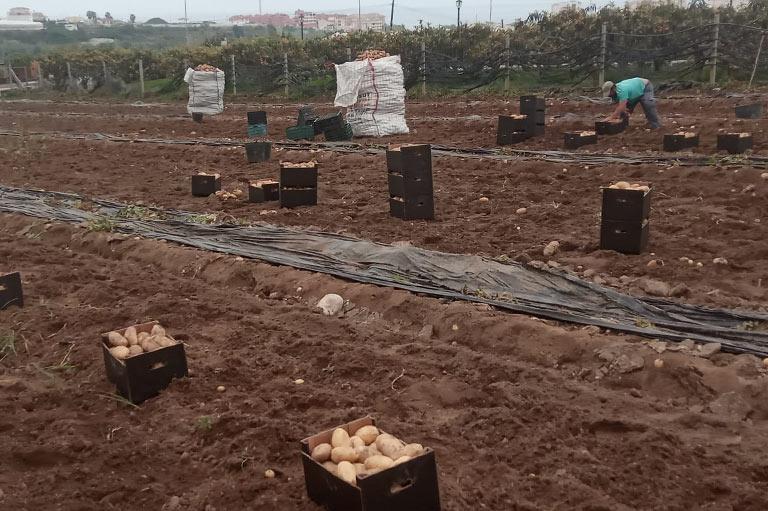 Organic potato producer Jose Jurado