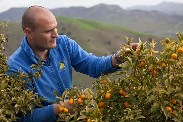 Organic kumquat producer Juan Antonio Rodriguez Sleumer