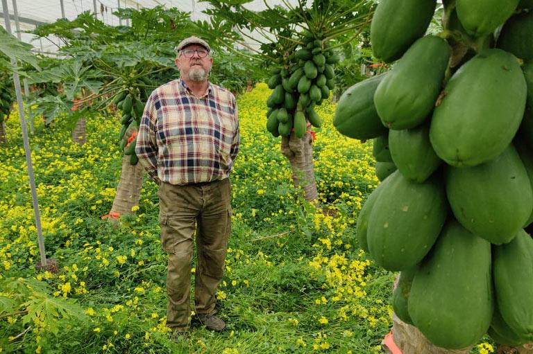 Organic papaya producer Manuel Serra