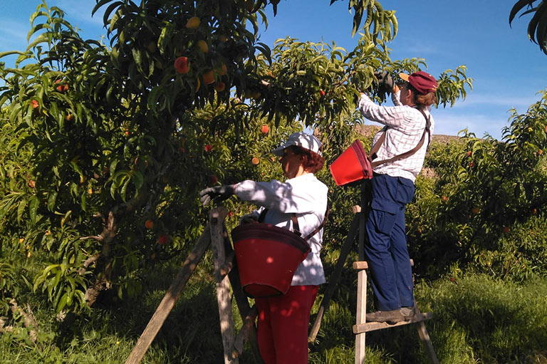 Organic fruit producer Sebastian Marin