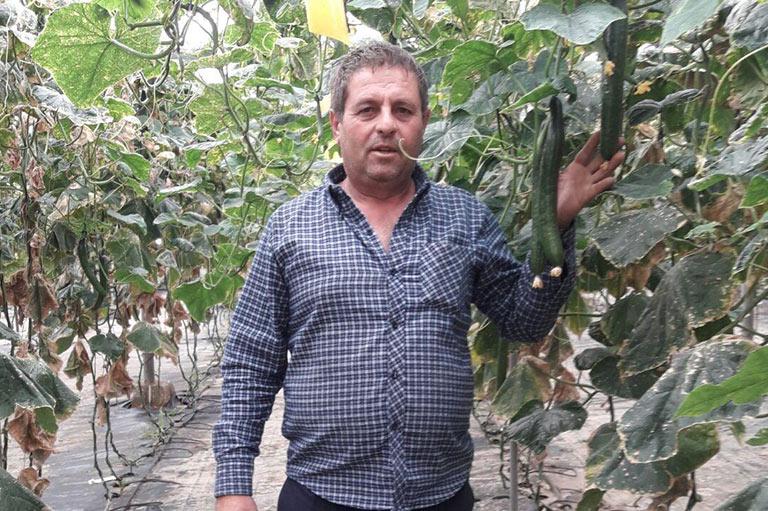 Organic cucumber producer Sergio Lopez Berbel